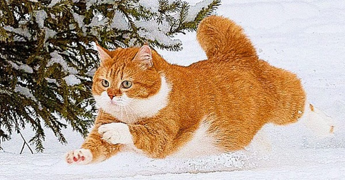 This happy chonk from Russia is one of the most adorable cats you'll ever see, see photos here - my positive outlooks