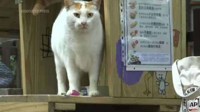 A stray cat in a small wooden house