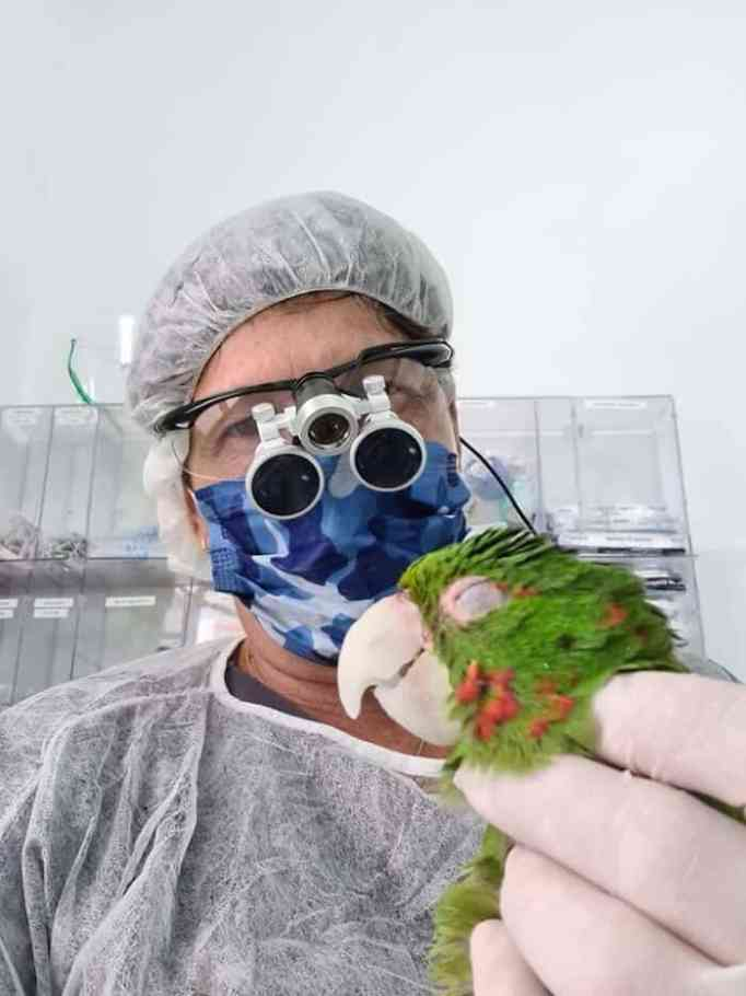 A veterinarian holding a bright green parrot with a new prosthetic beak
