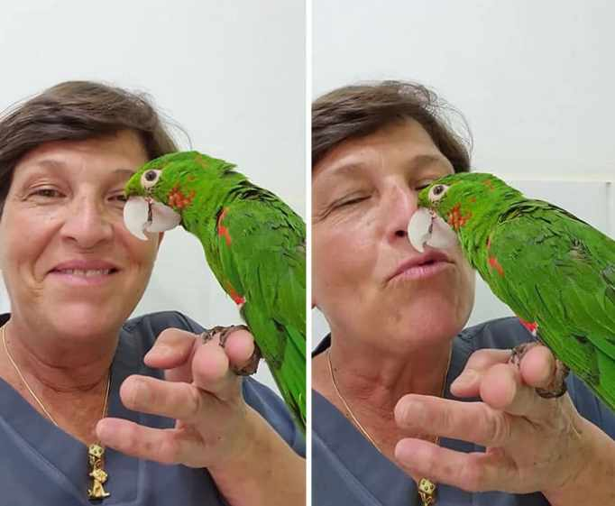 A bright green parrot with a new prosthetic beak perched on a veterinarian's hand