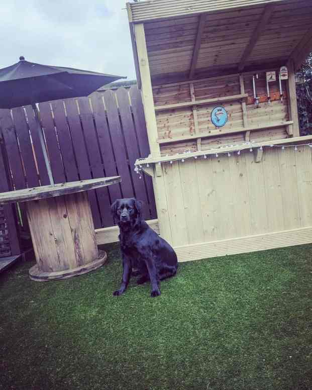 A black dog sitting in front of a backyard bar