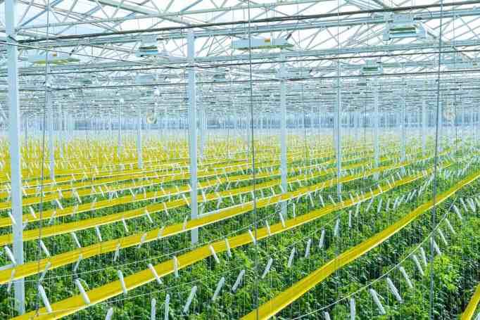 AppHarvest's high-tech indoor farms
