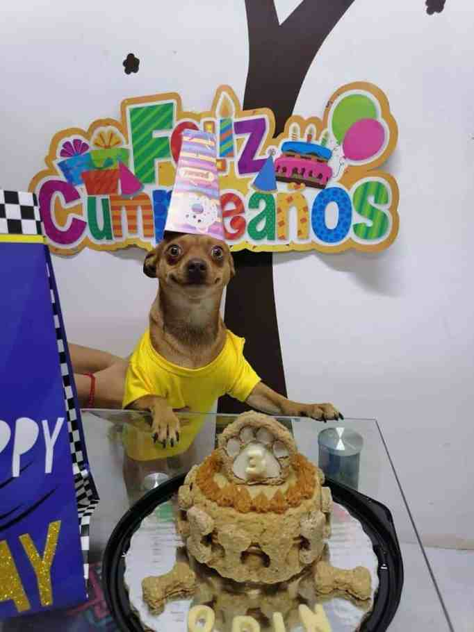 A tiny dog wearing a party hat with a cake in front of him