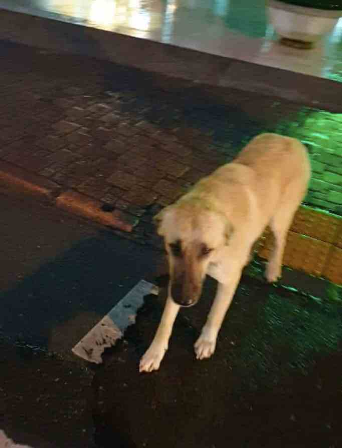 A stray dog walking down the street
