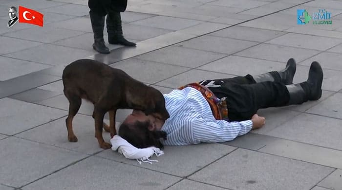 A stray dog comforting a man who he though was injured