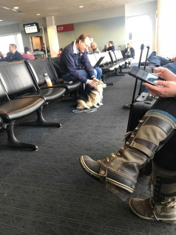 A man at the airport scratching Cora the corgi's ears