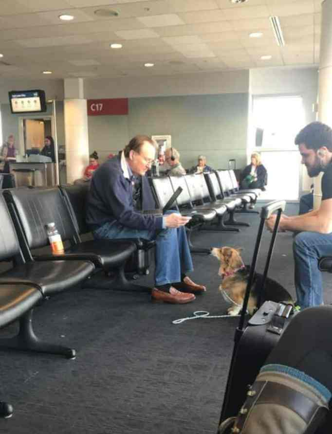 Dog looking at man in the airport