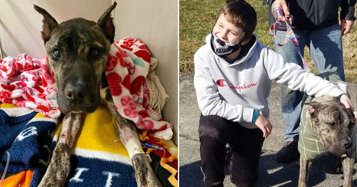 Dog on brink of death fully recovers and reunites with his 11-year-old rescuer - my positive outlooks