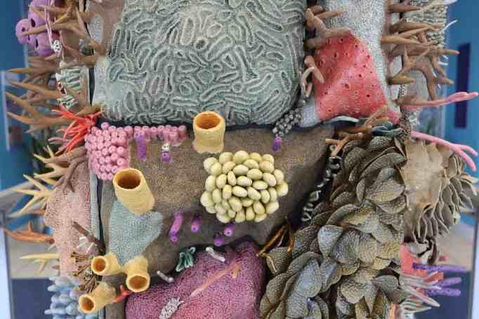Courtney Mattison's coral reef art