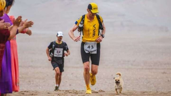 Dion Leonard and Gobi running the race together