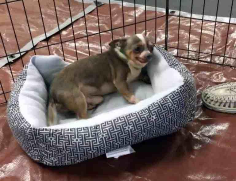 Freddie using his new bed