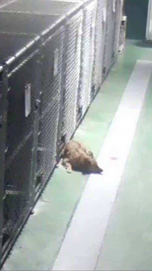 A dog lying outside a pen