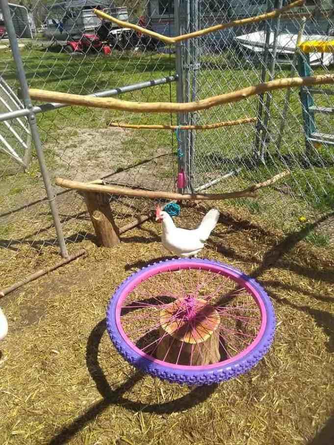 Курица и кастомная карусель из старого велосипедного колеса