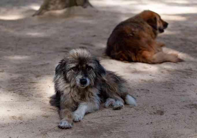 Две бездомные собаки
