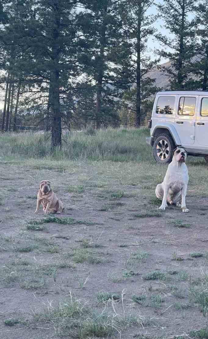 Morton's two dogs Darla and Louie