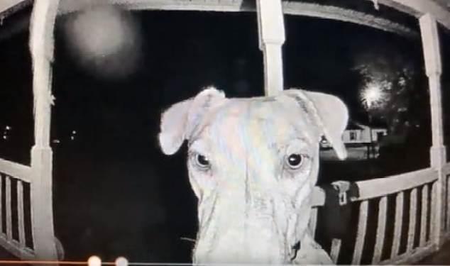 A screenshot of Rajah's face through the Ring camera