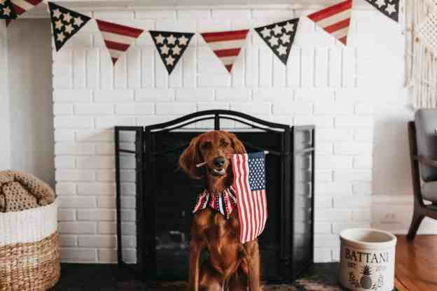 Family dog is ready to celebrate the 4th of July.