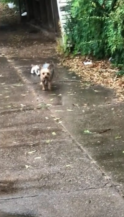 A dog and a kitten walking together