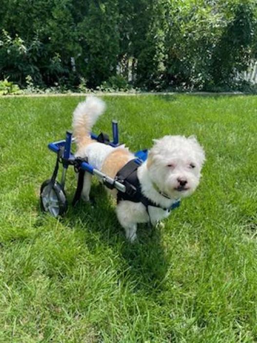 Teddy using his wheelchair