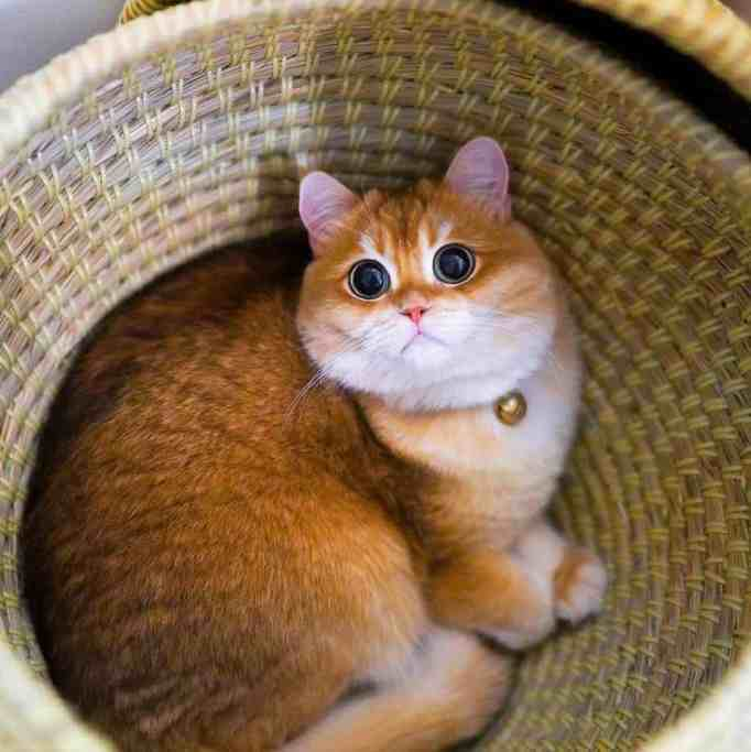 Pisco the cat in a basket
