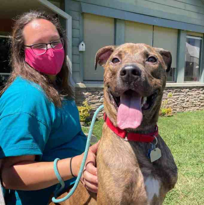 Big Mac the shelter dog with his new mom