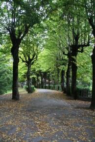 """Treelined pathway"", Tuscany"