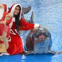 Last chance to see Dolphins by Starlight at uShaka Marine World!