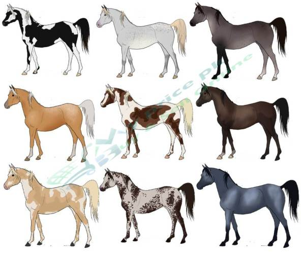 Top Horse Breeds/Families That Are Available Price in Pakistan With Pictures