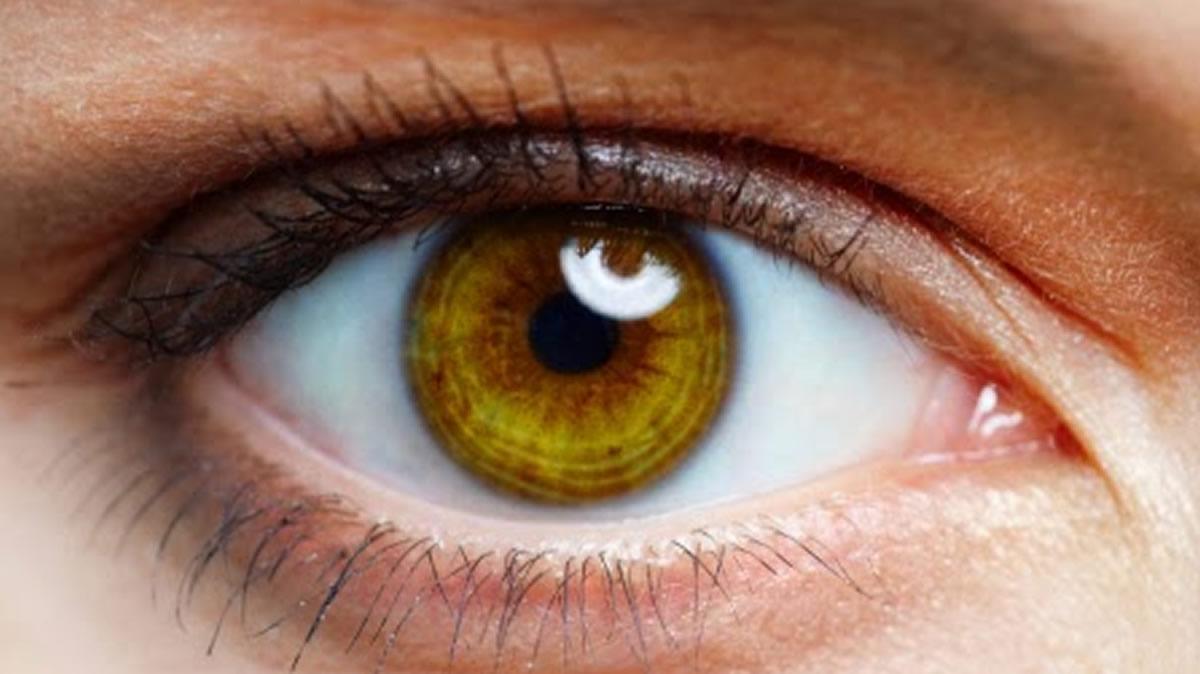 Human Body : Eyes