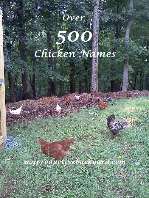 Over 500 Chicken Names
