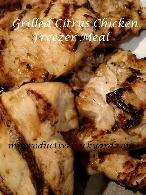 Grilled Citrus Chicken Freezer Meal