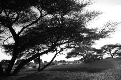 Here looks more like east Africa than Mauritania, the stunning nature struck me hard.