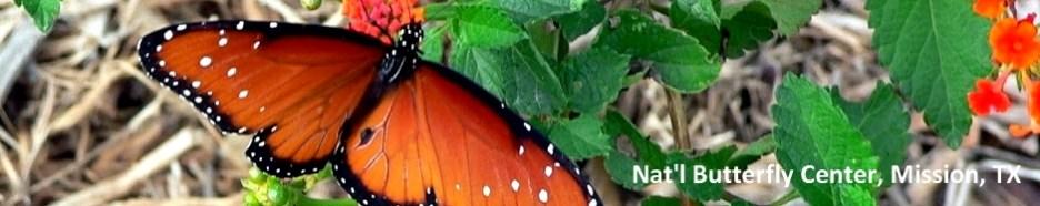 Bentsen Rio Butterfly