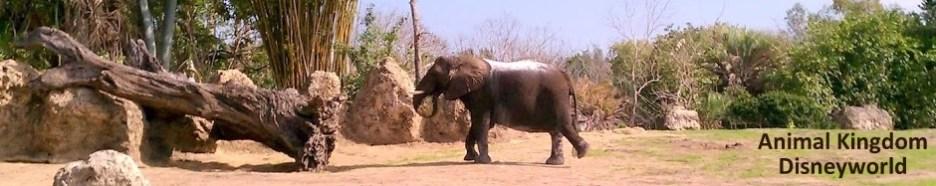 Disney Animal King Elephant
