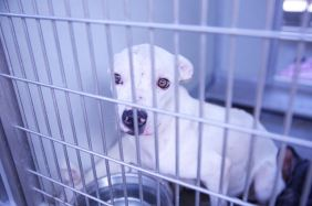 One of 35 dogs needing to be adopted after they were rescued from deplorable conditions at a home in Corona.