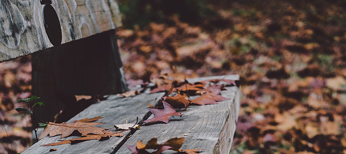 Fall bench with leaves
