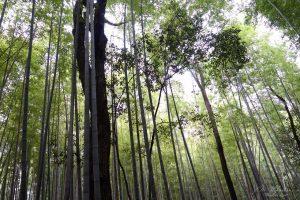 Arashiyama05