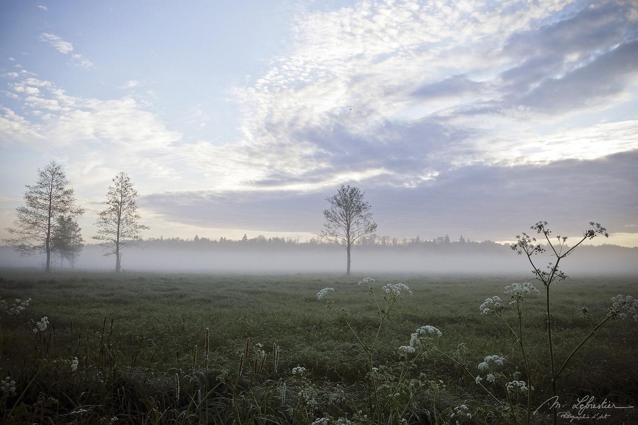 Białowieża forest Poland morning mist