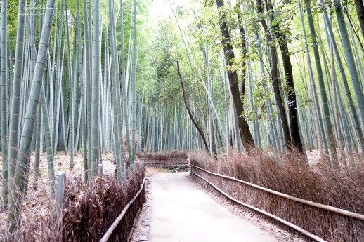 Sagano Bamboo Grove Japan