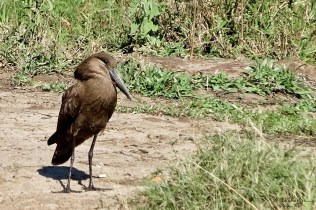 Hlane National Park bird Swaziland