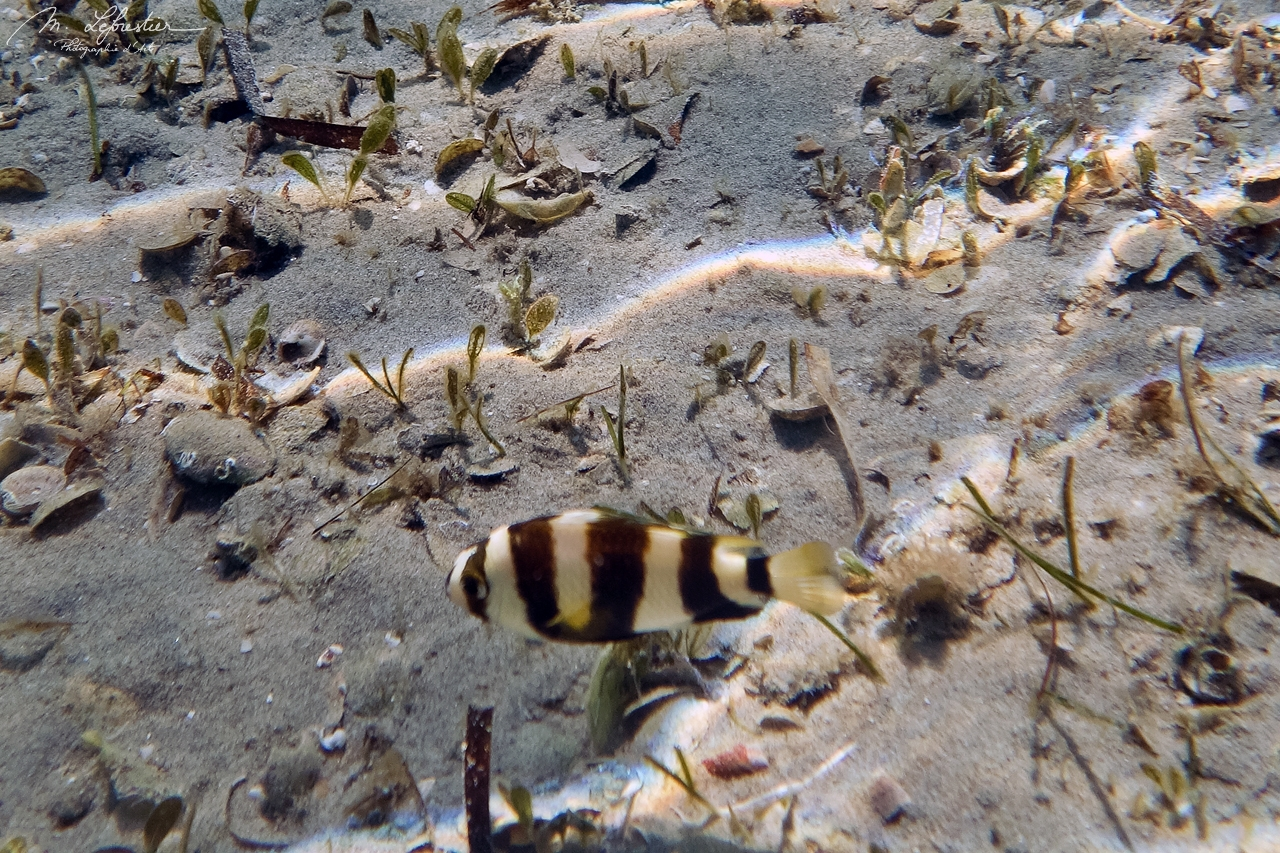 fish underwater in Pansy island, Mozambique