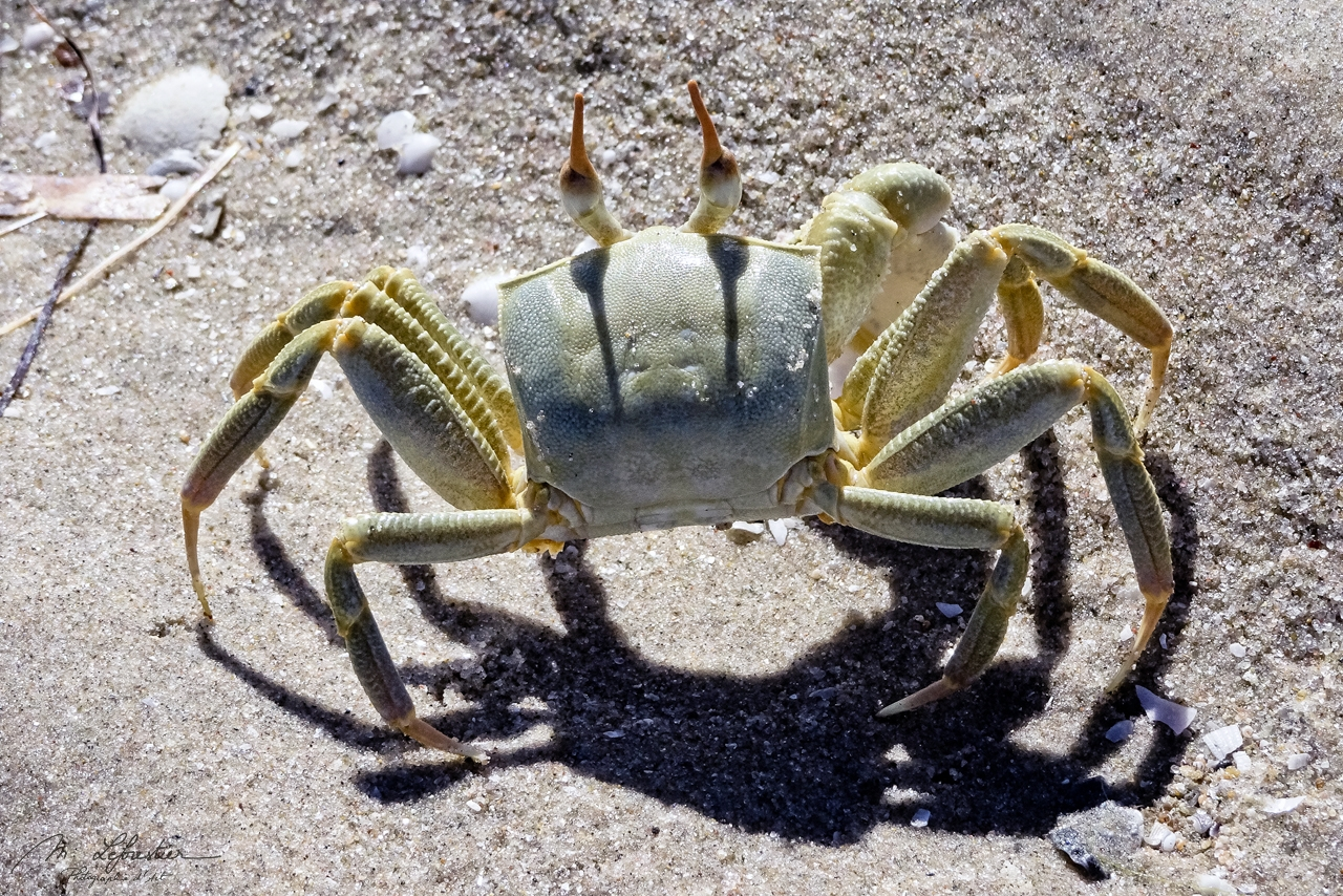 crab running in Pansy Island in Mozambique