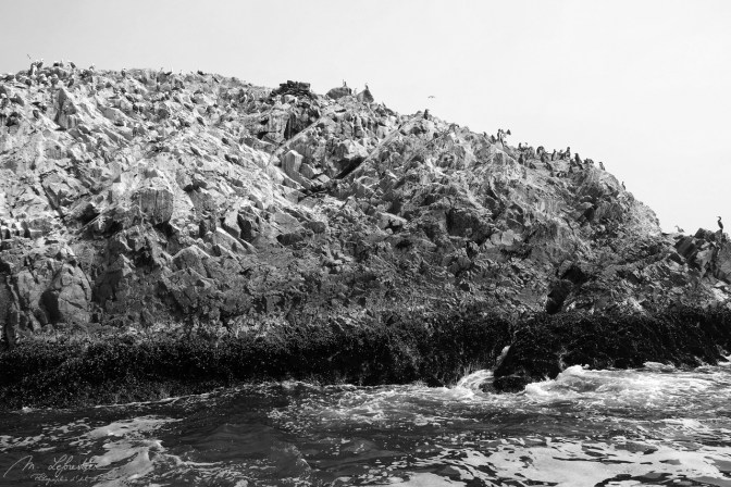 Islas Ballestas wildlife Peru