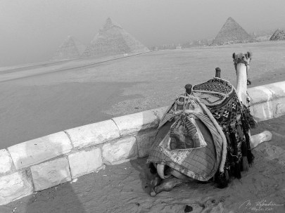 alignement of the pyramids of Giza with a camel in front
