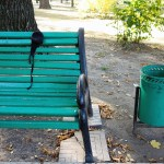 a bra hanging on a bench by its maching green in in a park in Chisinau, Moldova