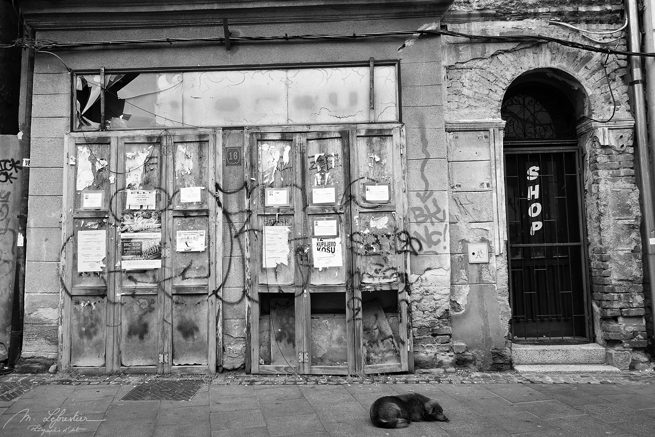 Dog sleeping in a street of Tuzla in front of a closed shop
