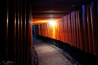 Fushimi Inari thousands' torii gates by night in Kyoto