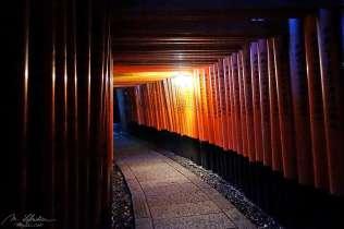 Fushimi Inari thousands' torii gates by night in Kyoto