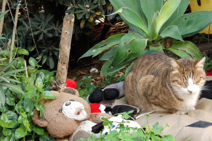 a stray cat found refuge in the cat village in St Julians Malta