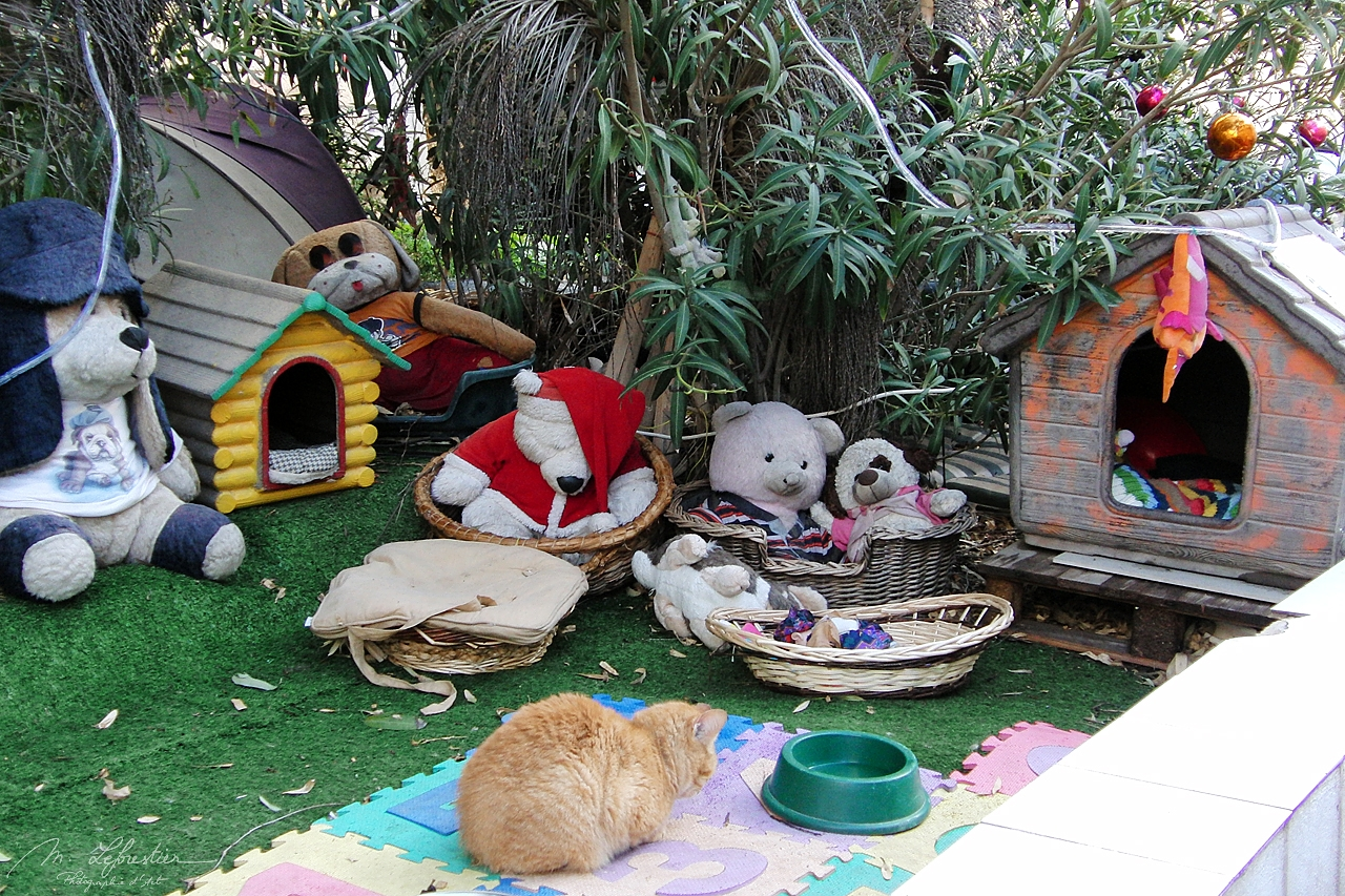 stuffed animal and refuge for stray cats in St. Julians Malta